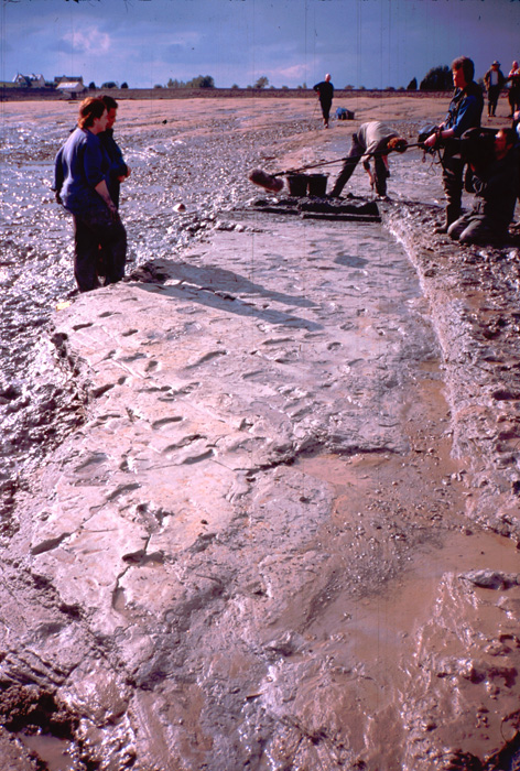 goldcliff mesolithic footprints