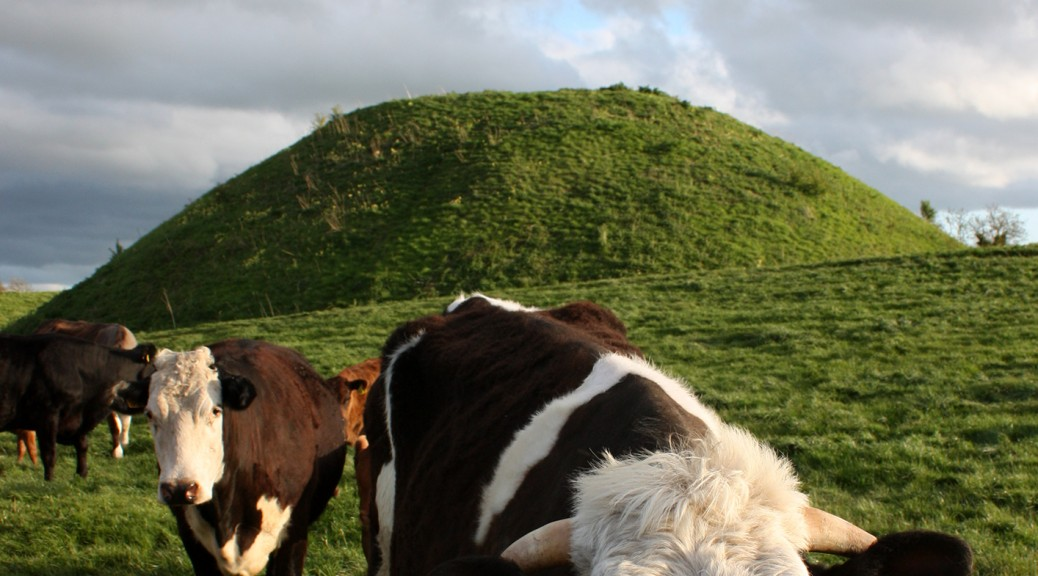 mound and cows